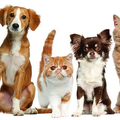 Pet Food And Grooming