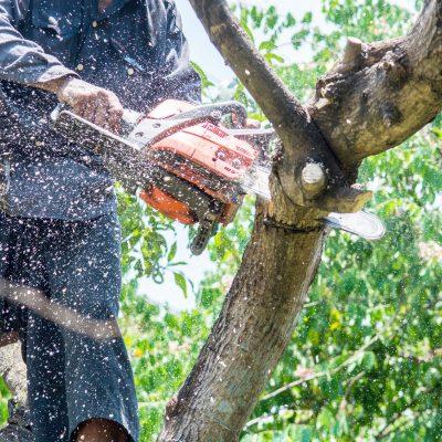 Chapala Tree Services