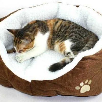 Colitas Pet Supply